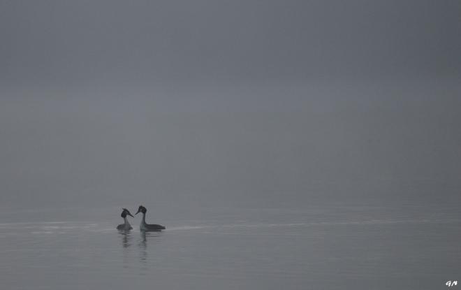 Lac de Genval 3.2014 © Gilbert Nauwelaers - 2