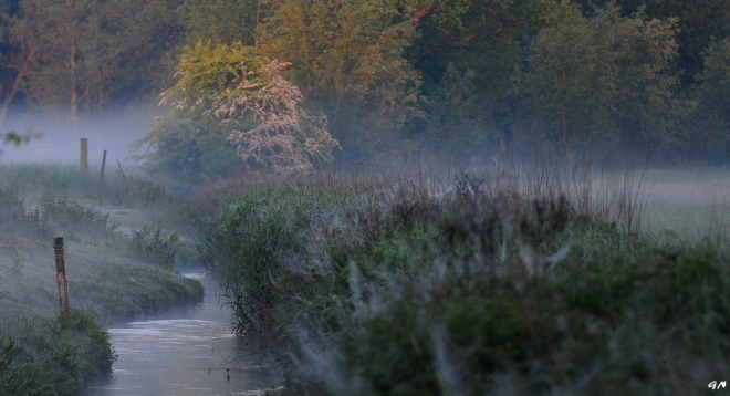 La Lasne Carpu 5.2014 © Gilbert Nauwelaers