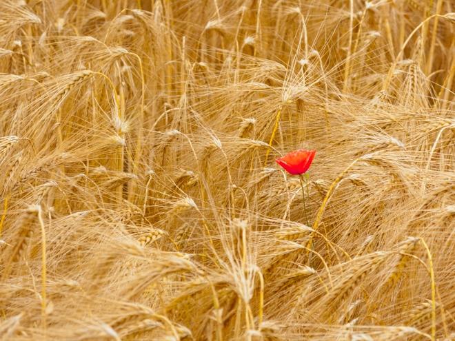 "Rue des Bleuets ""Grass of Life"" 6.2014 © Cedric Muscat - 2"