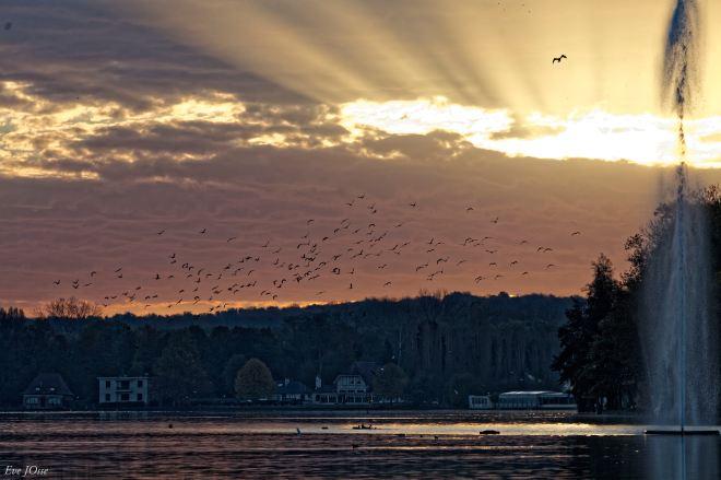 Lac de Genval 11.2014 © Evelyne Josse - 3