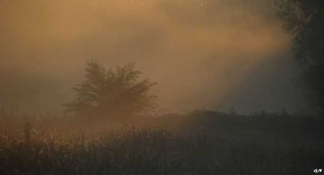Vallée de la Lasne 7.2014 © Gilbert Nauwelaers - 3