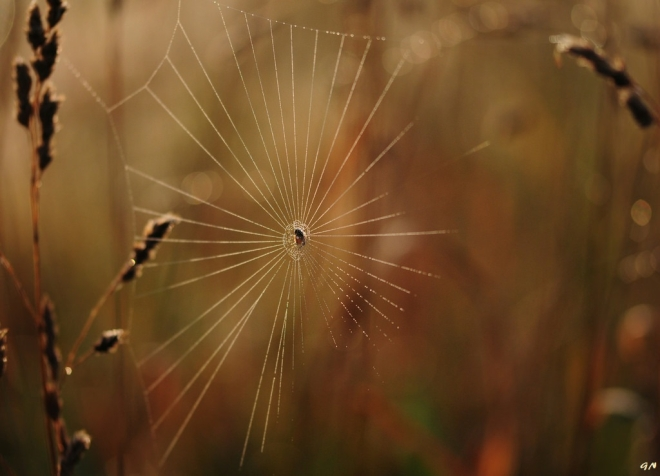 Araignée 7.2014 © Gilbert Nauwelaers - 1