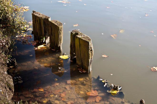 lac de genval 10.2012 © denisa vlaicu 2
