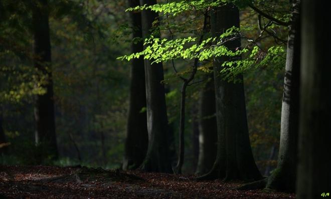 Bois de Rixensart 11.2014 © Gilbert Nauwelaers - 6