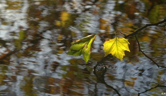 Lac de Genval 11.2014 © Gilbert Nauwelaers - 2.jpg