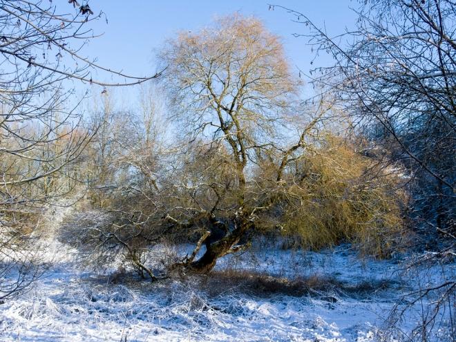 Grand Cortil Rosières (neige) 12.2014 © Cedric Muscat