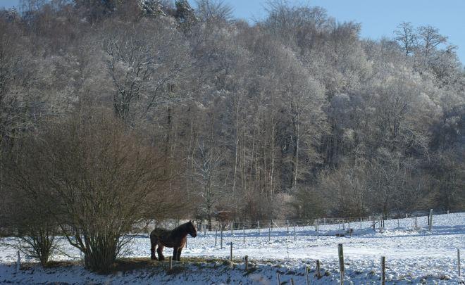 Vallée de la Lasne D 12.2014 © Gilbert Nauwelaers - 2
