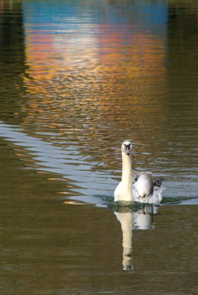 326 Lac de Genval 3.2012 © Eric de Séjournet-078