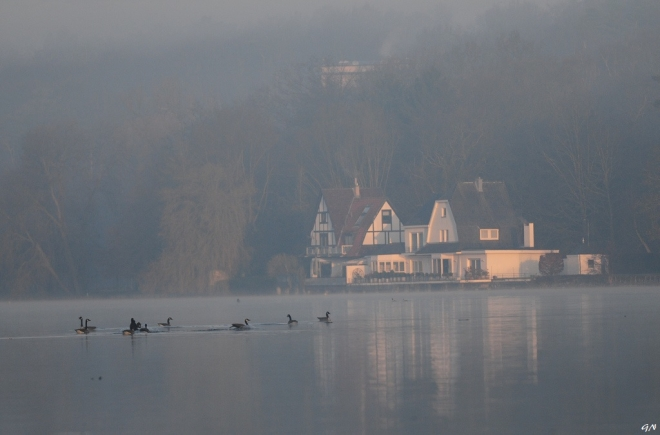 Lac de Genval 3.2014 © Gilbert Nauwelaers