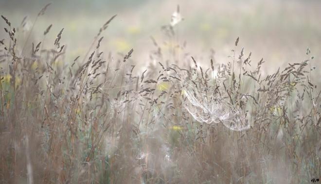 Vallée de la Lasne 7.2014 © Gilbert Nauwelaers - 1