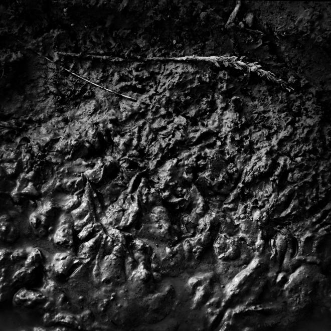 Le blé 3.2012 © Grégoire Welraeds