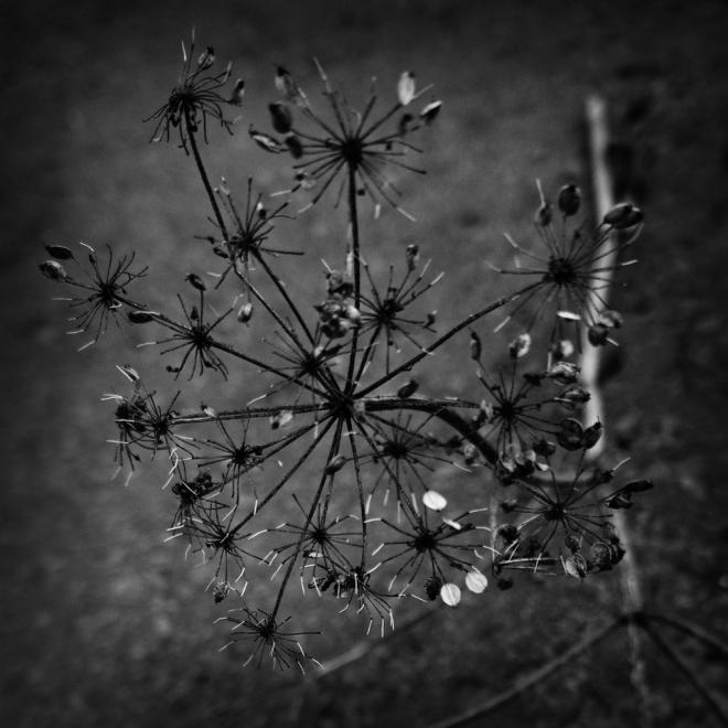 La branche 3.2013 © Grégoire Welraeds