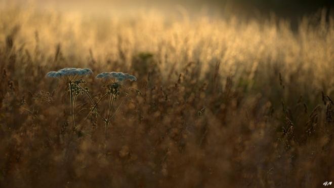 726 berces vallée de la lasne 7.2015 b © gilbert nauwelaers0