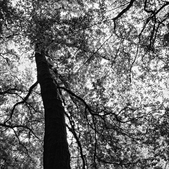 Arbre II 5.2013 © Grégoire Welraeds