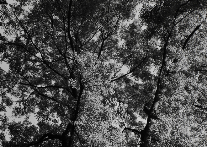 Arbres 6.2013 © Grégoire Welraeds