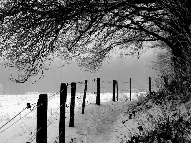 sentier du carpu 1.2013 bn © cedric muscat