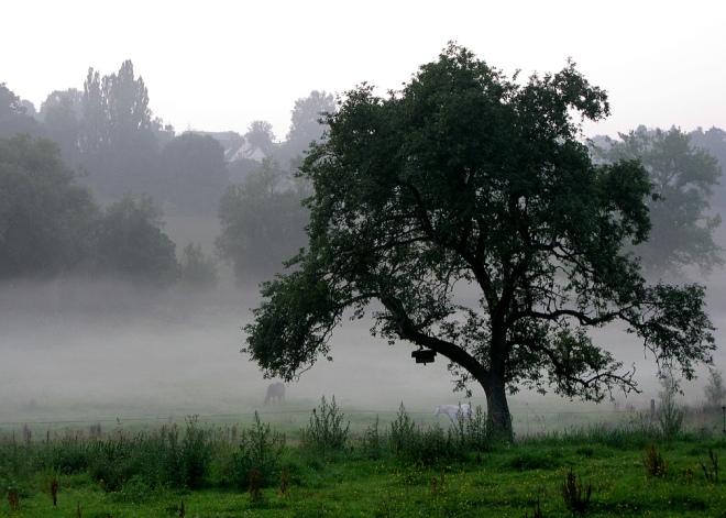 sentier du carpu août 2011 © cedric muscat