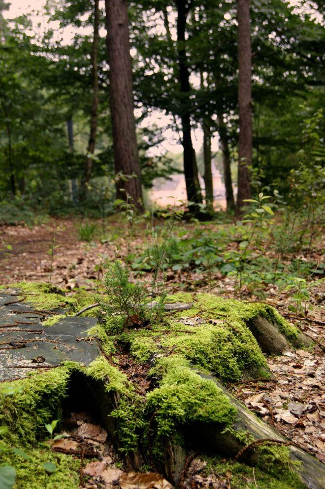 Bois de Rixensart B 8.2014 © Monique D'haeyere - 3