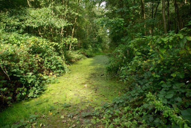 1015 bois du carpu vallée de la lasne 10.2015 © camille de vuyst14