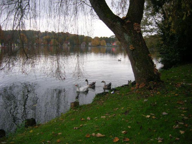 1211 20151025 lac de genval © alexandre de vuyst 0 - copie