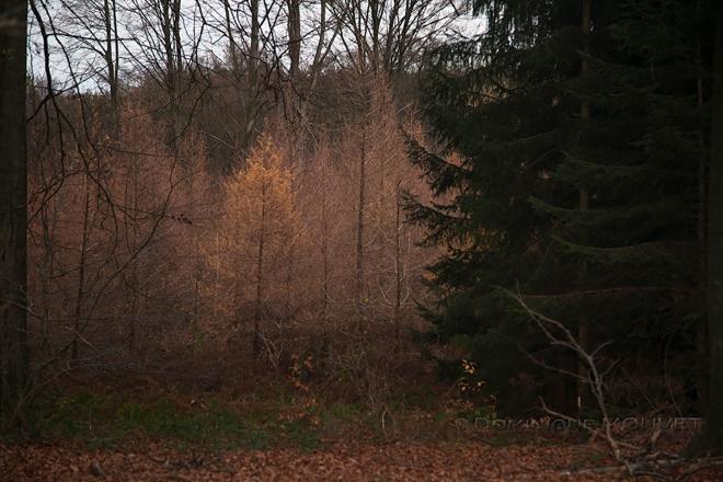 1224 bois de rixensart 12.2015 © dominique mouvet1