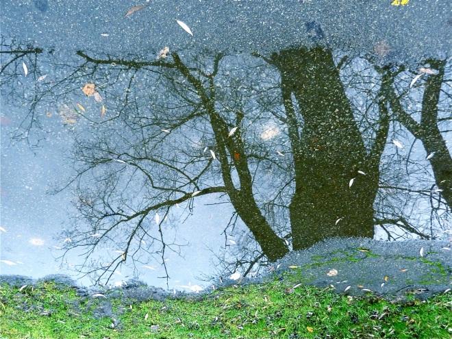 lac de genval 11.2012 © ges terzo