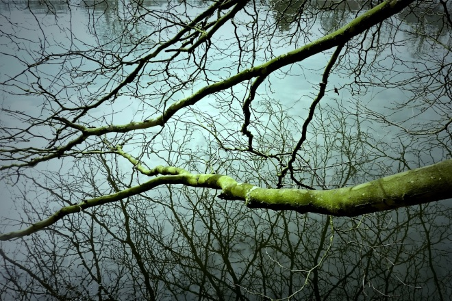 lac de genval (reflets) 3.2013 © ges terzo