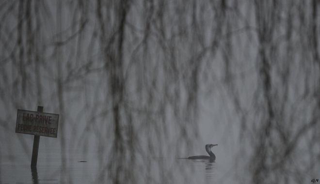 320 lac de genval 3.2016 © gilbert nauwelaers 0