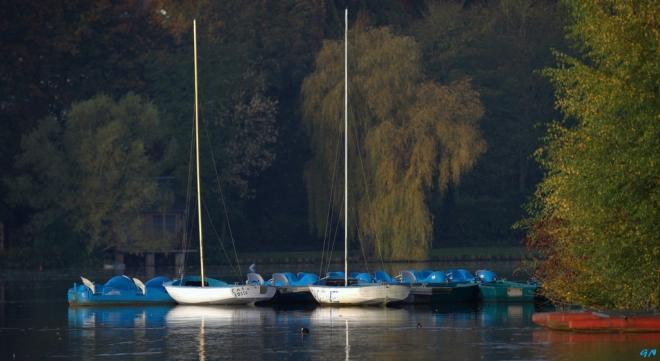 Lac de Genval 10.2014 B © Gilbert Nauwelaers - 3