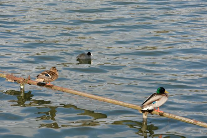 Lac de Genval 3.2015 B © Guy Dumay