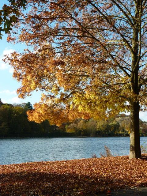 1211 lac de genval 11.2016 © marc van galder 2