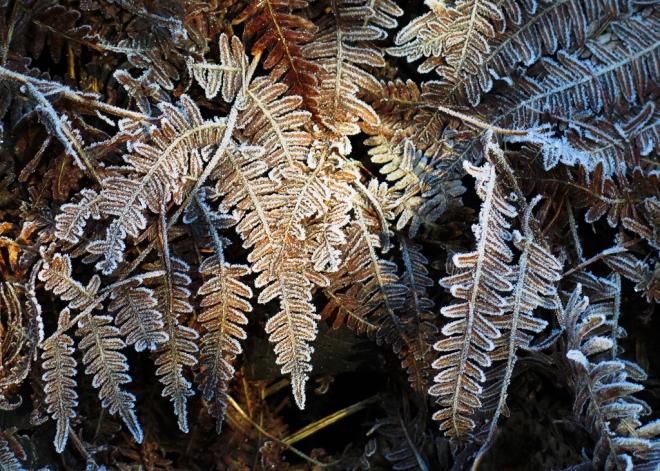 Bois de Rixensart (gel) 2.2015 © Cedric Muscat - 4
