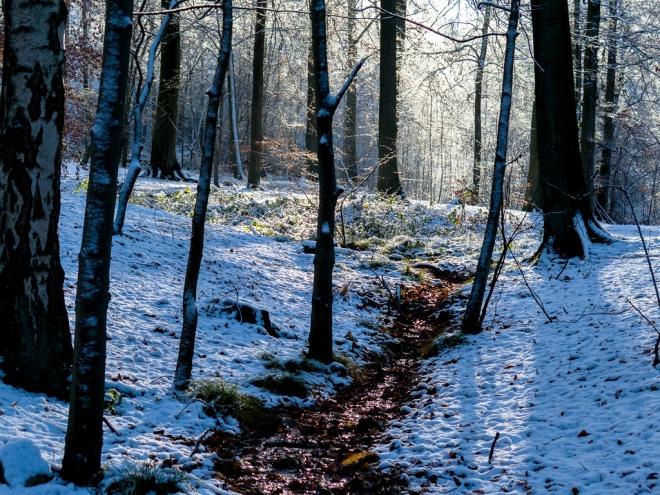 Bois de Rixensart (neige) 12.2014 © Cedric Muscat