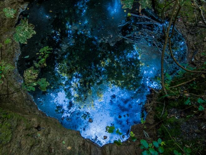1025 bois communal 9.2016 © cedric muscat 1