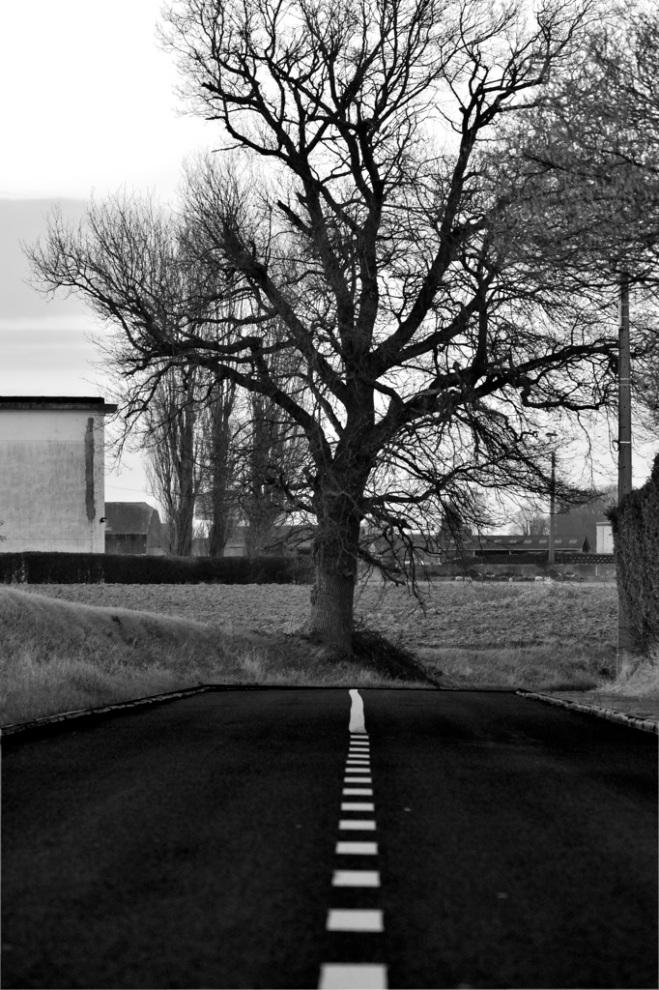 401 rue de malaise (arbre remarquable) © chrisitan de ceuninck