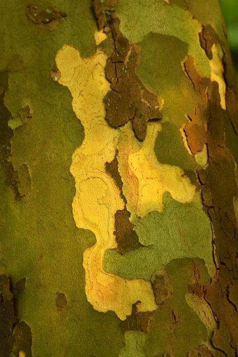 421 bois de rixensart © chrisitan de ceuninck