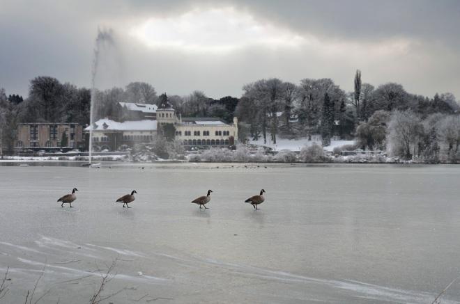 lac de genval 1.2013 © christian de ceuninck-002