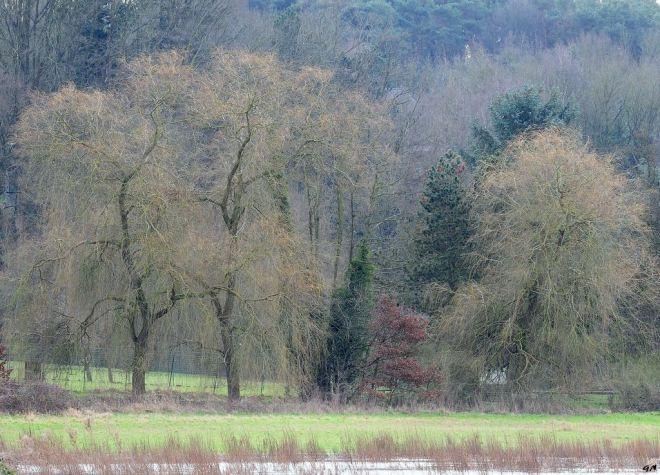 Bois du Baillois 2.2013 © Gilbert Nauwelaers-001