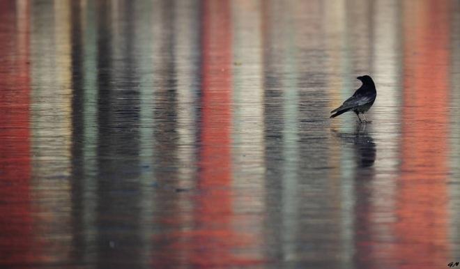 203 lac de genval oiseaux 1.2017 © gilbert nauwelaers 0