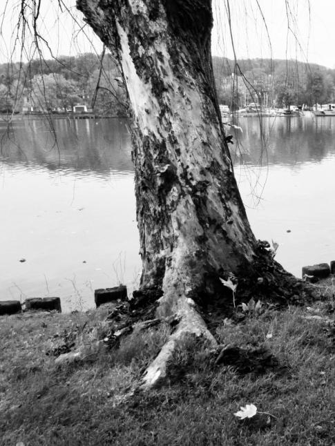 1104 Lac de Genval Promenade Paul Harris 10.2017 © Théa de Séjournet 1