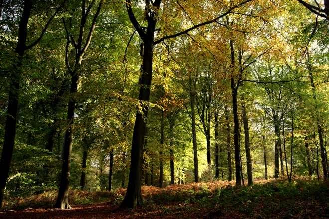 1130 Bois de Rixensart 10.2013 © MD