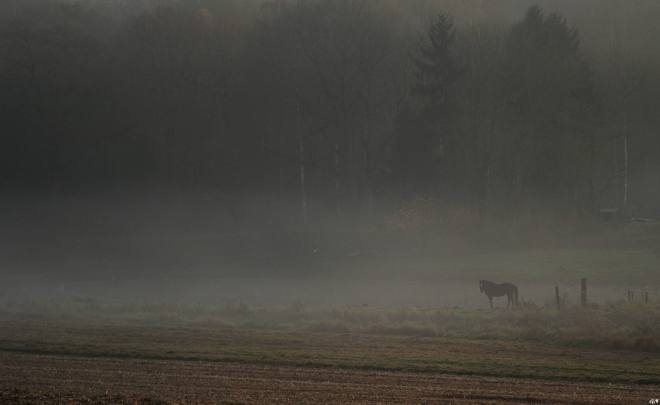 1214 Vallée de la Lasne Carpu Prairies 11.2014 © Gilbert Nauwelaers - 1