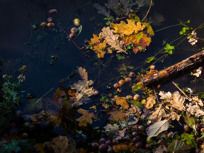 1226 Etang Gillet 10.2015 © Cedric Muscat0