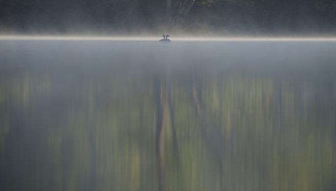 917. Grèbe 9.2017 © Gilbert Nauwelaers