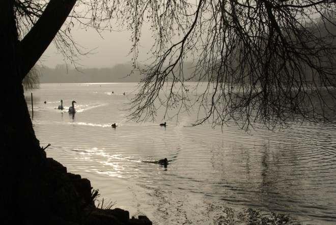 Lac de Genval 3.2012 © Eric de Séjournet-075