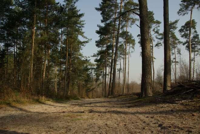 Bois de Rixensart 20090403 Plagniau © Eric de Séjournet (8)