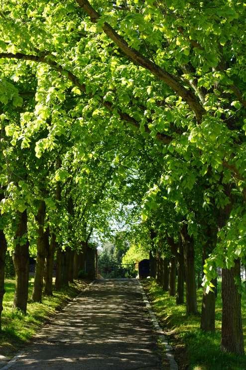 Chemin du Prince Cimetière de Rosières 5.2012 © Eric de Séjournet