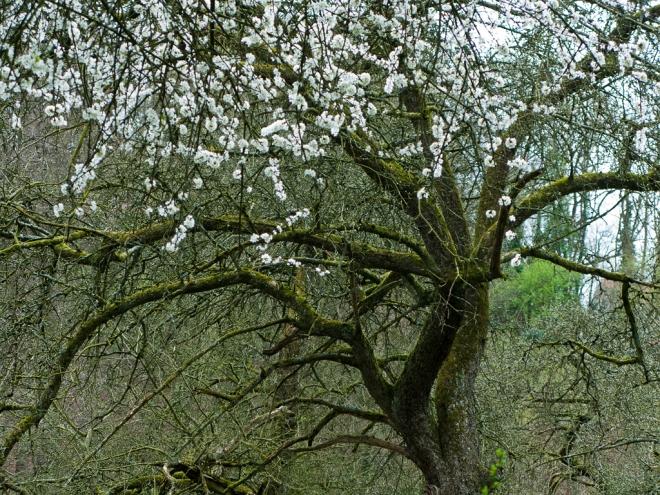 Sentier Passische 4.2014 © Cedric Muscat - 2