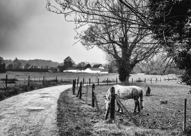 chemin du belloy b 11.2018 © cedric muscat