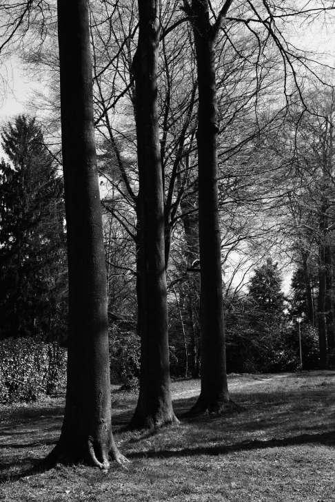 519 Sentier de la Vierge 4.2017 © Eric de Séjournet 14